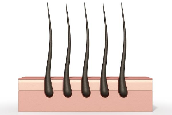 Hair Elements Specimen